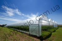 Пленка тепличная со стабилизатором Франция TRIFILM, 16 м/150 мкм/1 м
